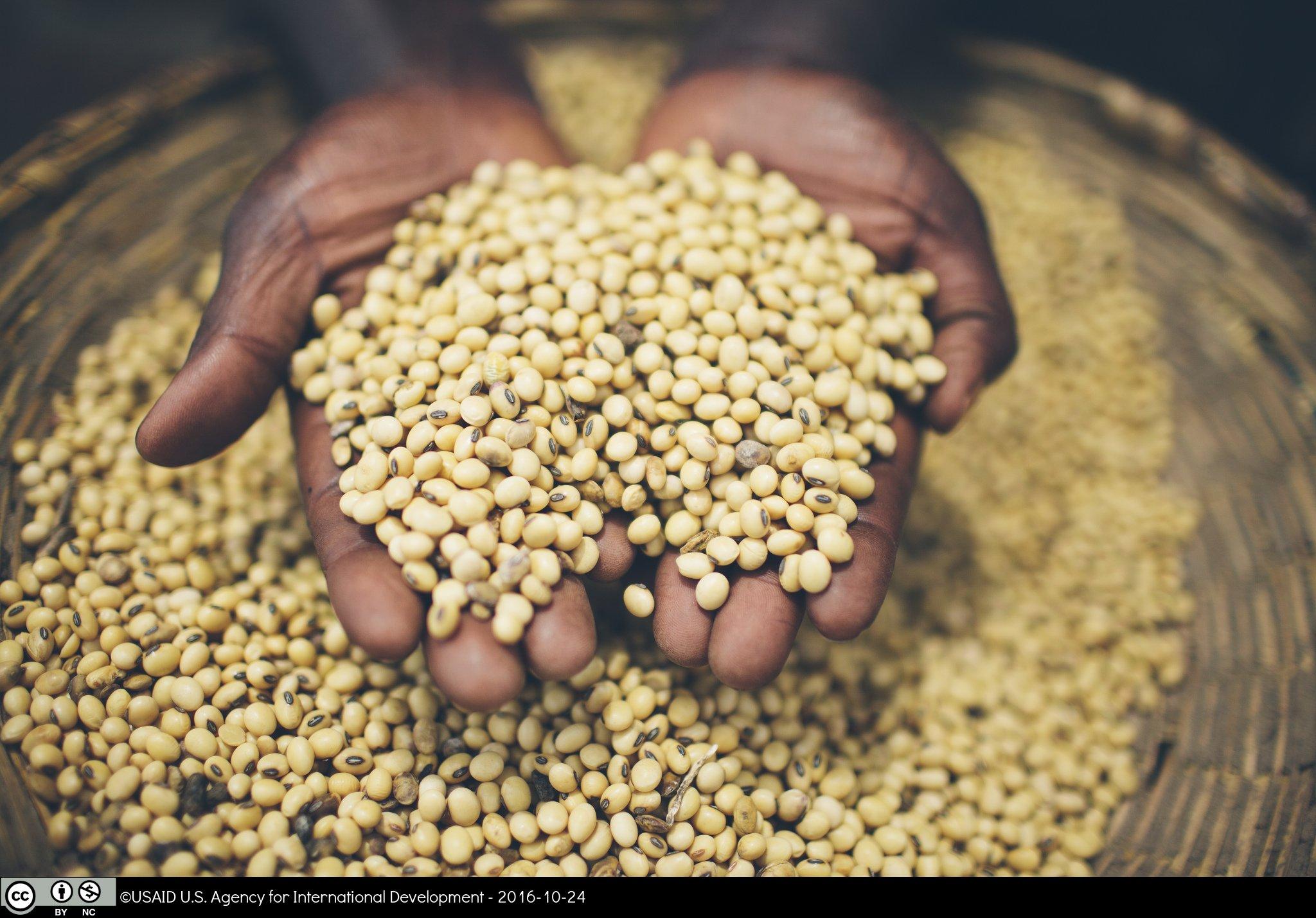 Hands in a barrel of grain
